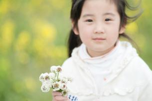 花を摘む女の子の写真素材 [FYI01357582]