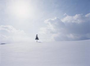 雪景色 美瑛の丘の写真素材 [FYI01357755]