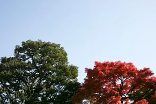 紅葉した木と空の写真素材 [FYI01358643]
