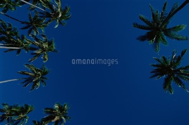 ヤシの木 空の写真素材 [FYI01358703]