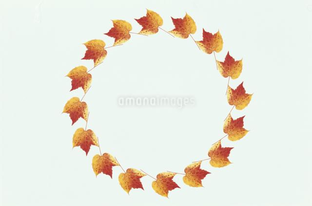 オレンジのツタの円のフレームの写真素材 [FYI01358743]
