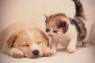 小犬と子猫の写真素材 [FYI01359075]