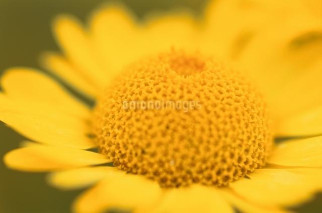 花のイメージの写真素材 [FYI01359479]