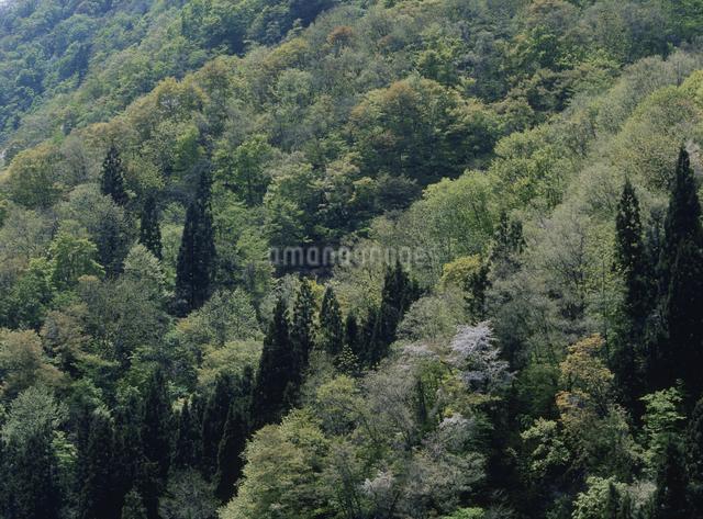 新緑の山の写真素材 [FYI01359510]