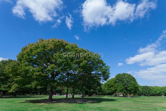 大泉緑地 大芝生広場の写真素材 [FYI01359525]
