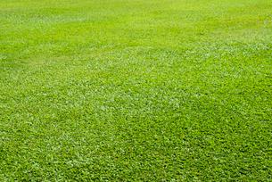 芝生の写真素材 [FYI01360388]