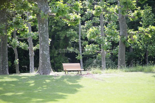 公園のベンチの写真素材 [FYI01360516]