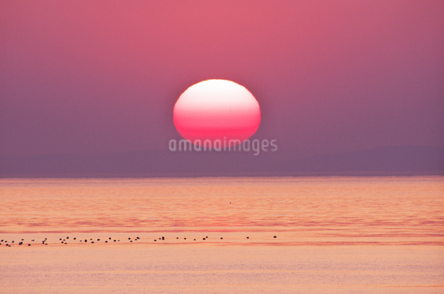 瀬戸内海(播磨灘)の夕陽の写真素材 [FYI01360538]
