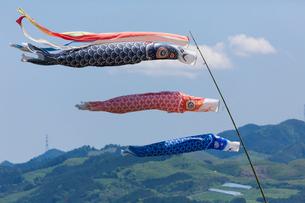 青空になびく鯉のぼりの写真素材 [FYI01360700]
