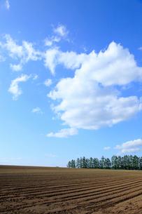 空と大地の写真素材 [FYI01361009]