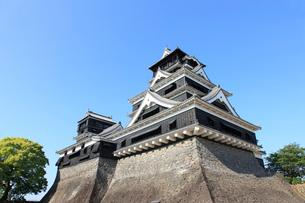熊本城の写真素材 [FYI01361124]