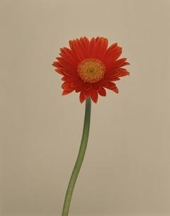 花の写真素材 [FYI01361642]