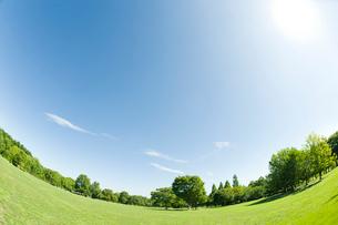 太陽と青空と草原と新緑の樹の写真素材 [FYI01362256]