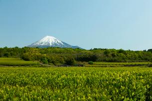 茶畑と富士山の写真素材 [FYI01363130]