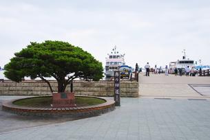 松島湾の観光船のりばの写真素材 [FYI01363206]