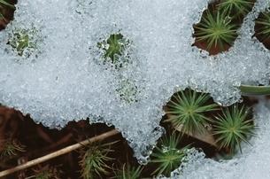 雪解けの写真素材 [FYI01363441]
