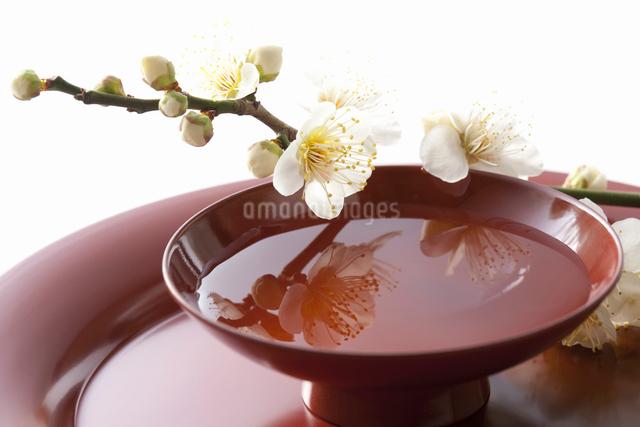梅の花と杯の写真素材 [FYI01364680]