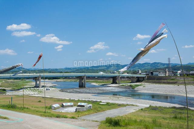 吉野川と鯉のぼりの写真素材 [FYI01365064]
