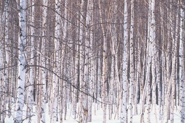 冬の木々の写真素材 [FYI01365404]