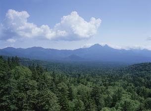 原生林と青空の写真素材 [FYI01365435]