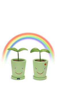 双葉のカップルと虹の写真素材 [FYI01366010]