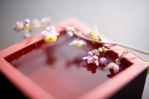 生け花の写真素材 [FYI01366440]