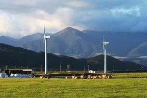風力発電と牧草地とエゾシカの写真素材 [FYI01366726]