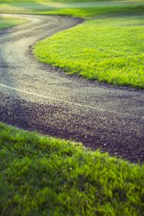 公園の中を通る道の写真素材 [FYI01366813]