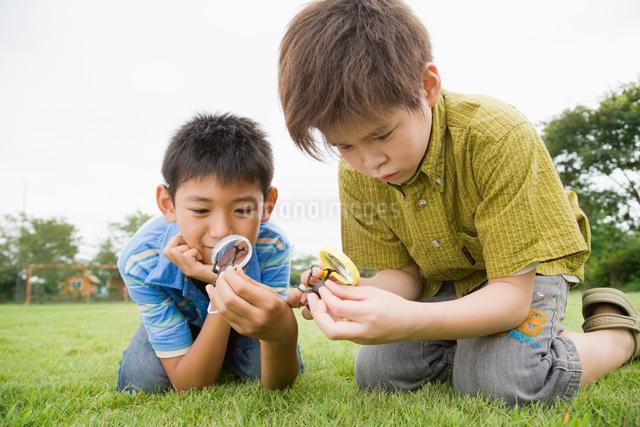 虫眼鏡で虫を見る男の子達の写真素材 [FYI01367013]