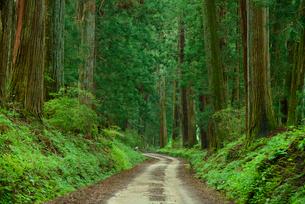 日光杉並木の街道の写真素材 [FYI01367199]