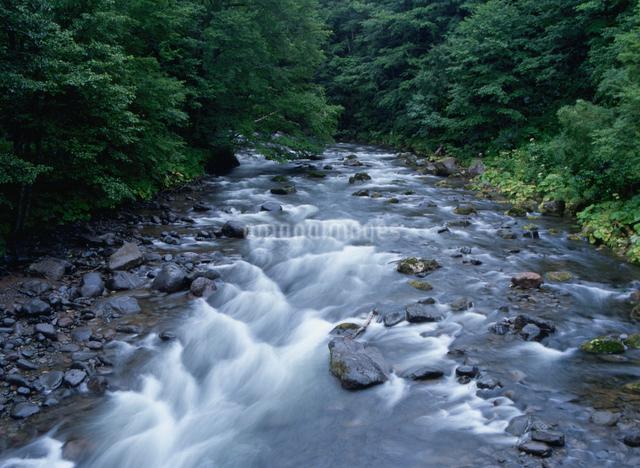 美瑛川の写真素材 [FYI01367242]