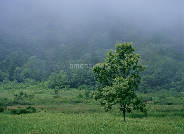大沼湿原の写真素材 [FYI01367280]