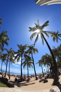 ハワイ州オアフ島のワイキキビーチにたたずむヤシの木と青空の写真素材 [FYI01367326]