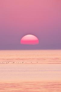 瀬戸内海(播磨灘)の夕陽の写真素材 [FYI01367432]