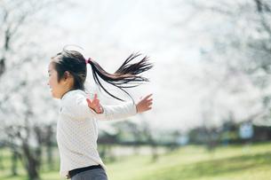 桜並木を走る女の子の写真素材 [FYI01367503]