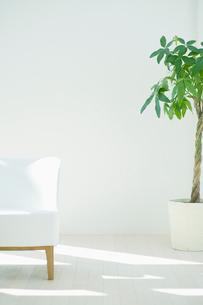 観葉植物とソファのあるインテリアの写真素材 [FYI01367550]