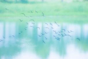 湖面と鳥の写真素材 [FYI01367981]