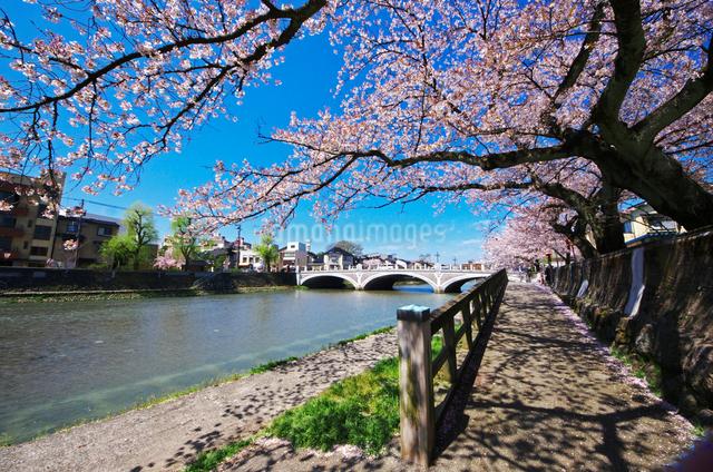 浅野川と浅野川大橋の桜の写真素材 [FYI01368265]