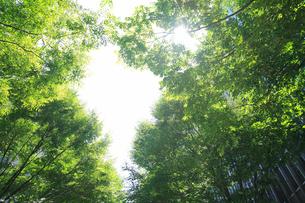 街路樹と木漏れ日の写真素材 [FYI01368518]