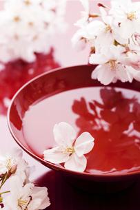 桜の花びらと杯の写真素材 [FYI01369652]