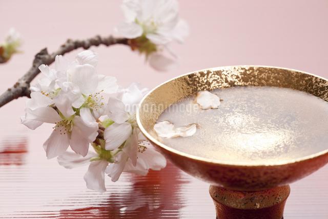 さくらの花と杯の酒の写真素材 [FYI01370002]