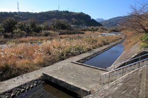 小田原用水の早川取水堰の写真素材 [FYI01370426]