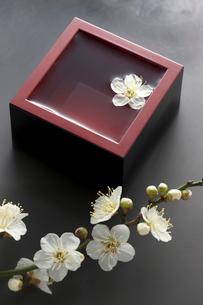 升酒と梅の花の写真素材 [FYI01370566]
