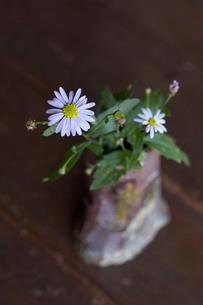 花器と野の花の写真素材 [FYI01371427]