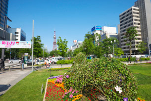 大通公園 花フェスタとテレビ塔の写真素材 [FYI01372915]