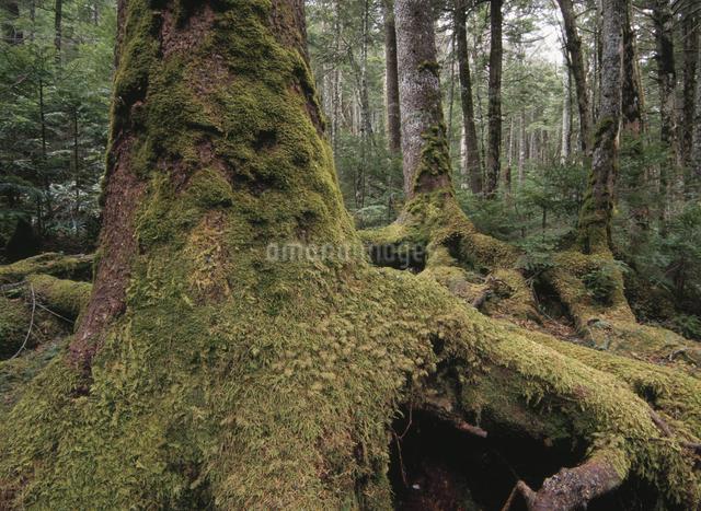 原生林の写真素材 [FYI01372980]