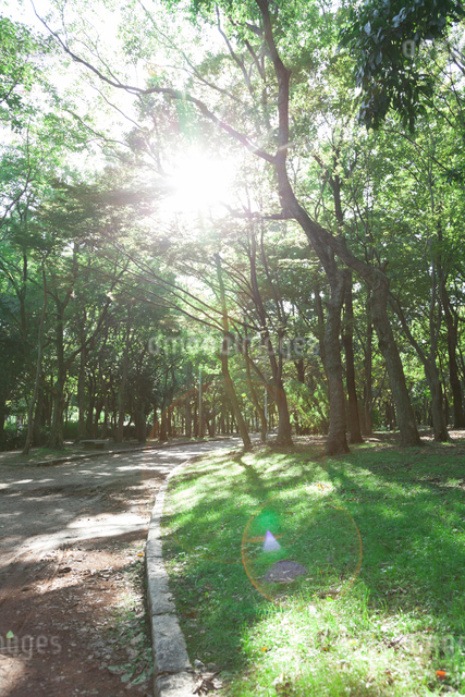 大泉緑地の並木道の写真素材 [FYI01372986]