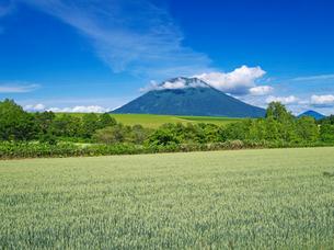 麦畑と羊蹄山の写真素材 [FYI01373093]