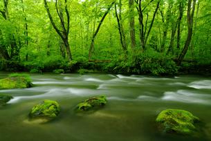 奥入瀬渓流の写真素材 [FYI01373476]