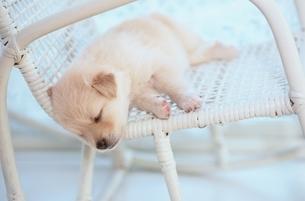 子犬の写真素材 [FYI01373483]